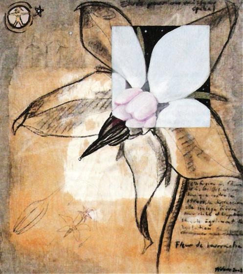 fleurdebourrache