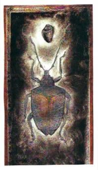 scarabée 1999 - Ea