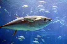 fish-savior